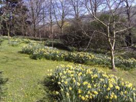 Spring at Maefron